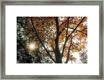 Autumn Light Framed Print by Jamie Pham