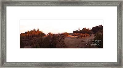 Autumn Light Framed Print by JoAnn SkyWatcher