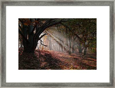 Autumn Light  Framed Print by Scott Carruthers