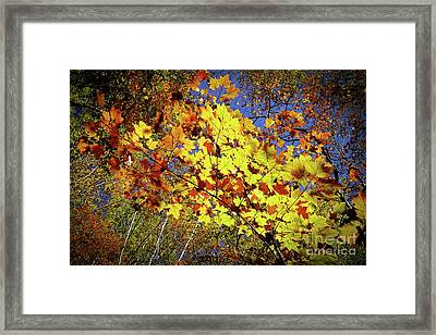 Autumn Light Framed Print by Tatsuya Atarashi