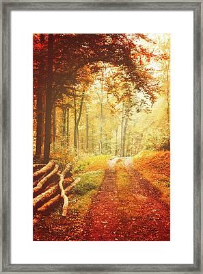 Autumn Lights Framed Print