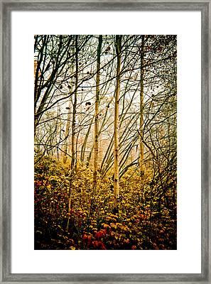 autumn Lines Framed Print by Maggie Terlecki