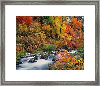 Autumn Magic Framed Print by Leland D Howard