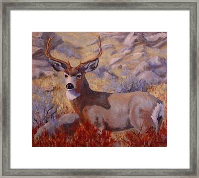 Autumn Majesty Framed Print by Debra Mickelson