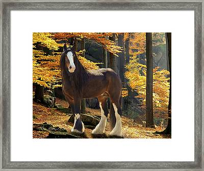 Autumn Majesty Framed Print