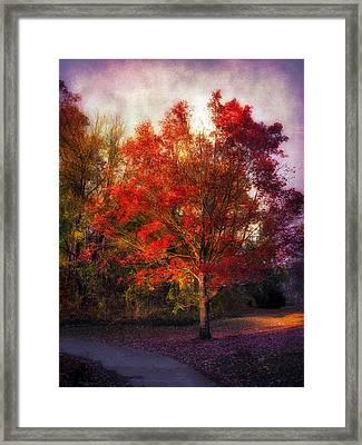 Autumn Maple 2 Framed Print