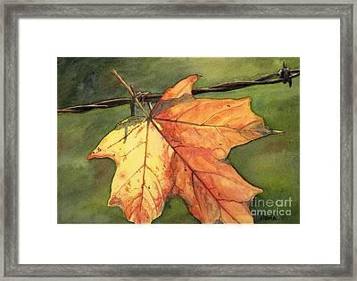 Autumn Maple Leaf Framed Print by Antony Galbraith
