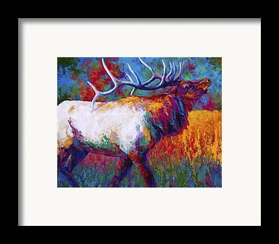 Elk Framed Prints