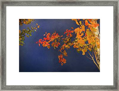 Framed Print featuring the photograph Autumn Matinee by Theresa Tahara