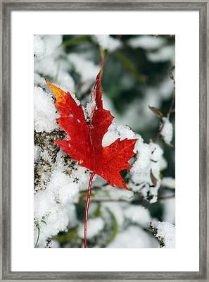 Autumn Meets Winter Framed Print