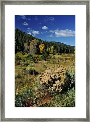Autumn Morning In The Canyon Framed Print