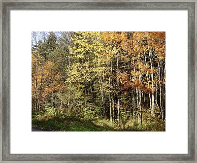 Autumn Morning Framed Print by Paula Prindle