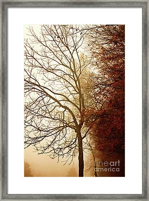 Framed Print featuring the photograph Autumn Morning by Stephanie Frey