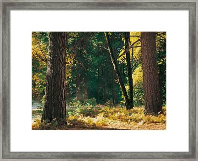 Autumn Morning Yosemite National Park Framed Print by Edward Mendes