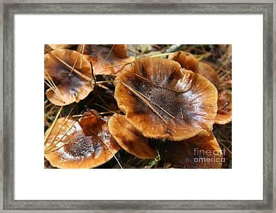 Autumn Mushrooms Framed Print by Debra Straub