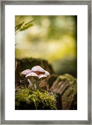 Autumn Mushrooms Framed Print