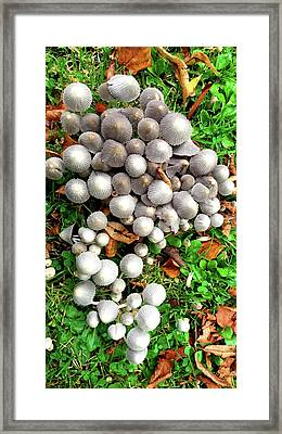 Autumn Mushrooms Framed Print