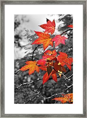 Autumn On Black And White Framed Print by Kaye Menner