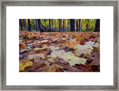 Autumn On The Forest Floor Framed Print by Rick Berk