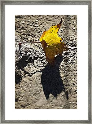 Autumn On The Rocks Framed Print by Ross Powell