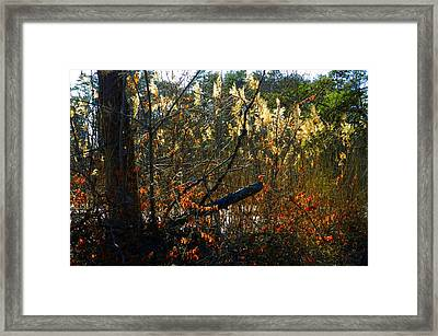 Autumn On The Sough Framed Print by Julie Dant