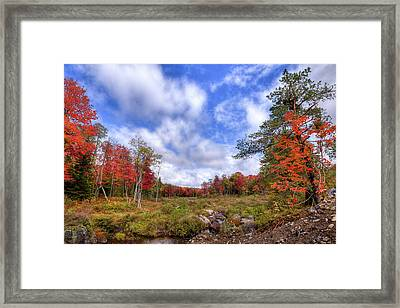 Framed Print featuring the photograph Autumn On The Stream by David Patterson
