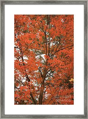 Autumn Orange - Digital Framed Print