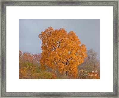 Autumn Over Prettyboy Framed Print