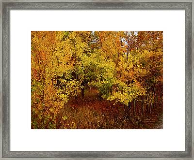 Autumn Palette Framed Print by Carol Cavalaris