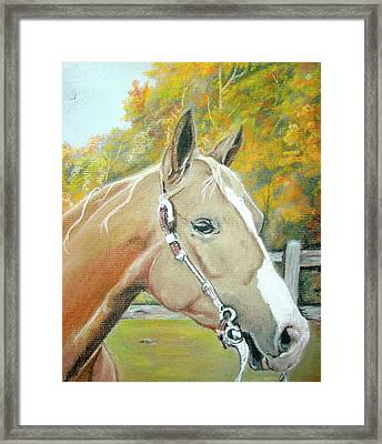 Autumn Palomino Framed Print by Crystal  Harris-Donnelly