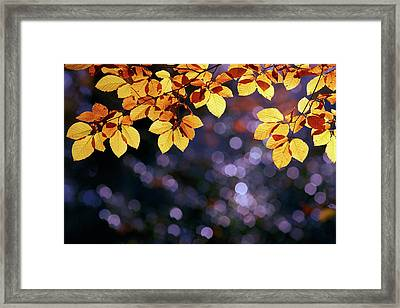 Autumn Party Framed Print by Roeselien Raimond