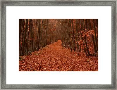 Autumn Passage Framed Print by Raymond Salani III