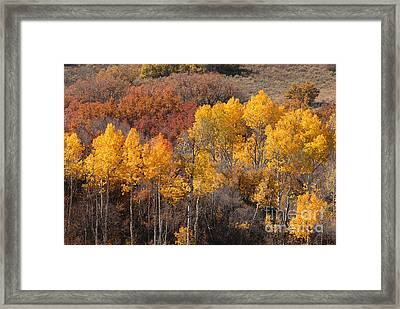 Autumn Patchwork Framed Print by Dennis Hammer