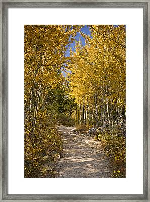 Autumn Path Framed Print by Andrew Soundarajan