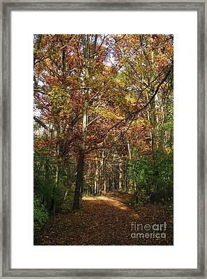 Autumn Path At St Croix Bluffs Framed Print