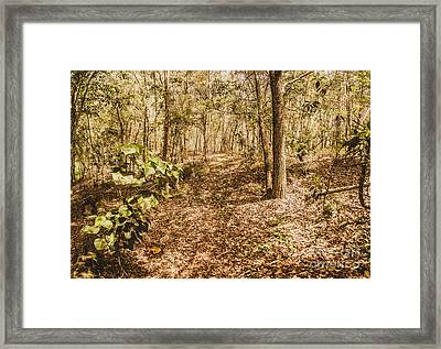 Autumn Path Obscured By Fallen Foliage Framed Print