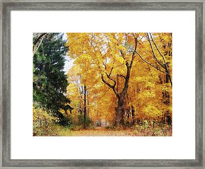 Autumn Path Framed Print by Susan Savad