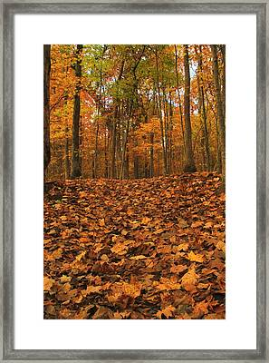 Autumn Path To The Forest Framed Print