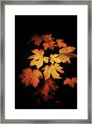 Autumn Photo Framed Print