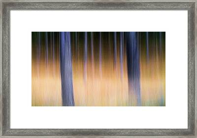 Framed Print featuring the photograph Autumn Pine Forest Abstract by Dirk Ercken