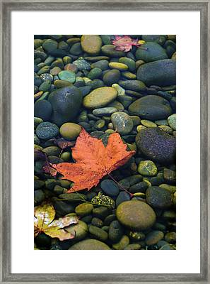 Autumn Pool 2017 Framed Print