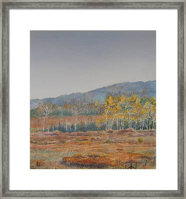 Autumn Poplars Framed Print by Debbie Homewood