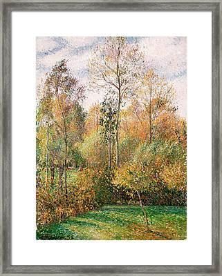 Autumn Poplars, Eragny Framed Print by Camille Pissarro