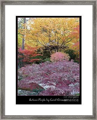 Autumn Purple Framed Print by Carol Groenen