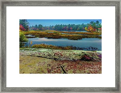 Autumn Rain 2 Framed Print