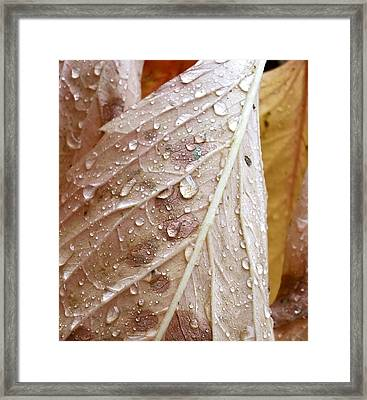 Autumn Rain Framed Print by Alpha Pup