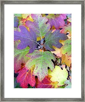Autumn Rainbows Framed Print by Mindy Newman