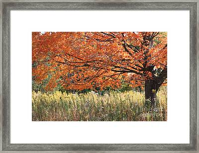 Framed Print featuring the photograph Autumn Red   by Paula Guttilla