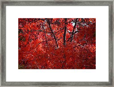Autumn Red Trees 2015 Framed Print