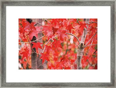 Autumn Reds Framed Print